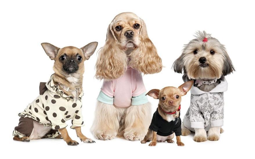 Цена на стрижку собак